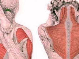 Упражнения для шеи: быстро освобождают от зажимов и нормализуют давление